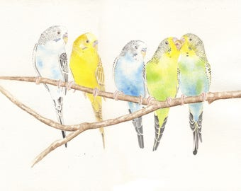 Five Parakeets, budgies, 8x10 PRINT from original watercolor painting, art &  collectibles, wall art, animals, birds, earthspalette
