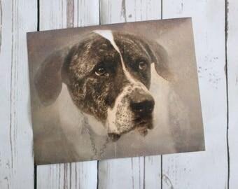 Vintage Style Great Dane Dog Sepia 10 x 8 Photo Art Print by Dog Photographer Liz Lane