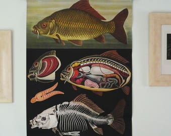 Antique 1979 Original FISHES Pull Down Chart. Jung Koch Quentell School Chart. Large Fishing Poster.Fishes. Freshwater Fish. 38 years old
