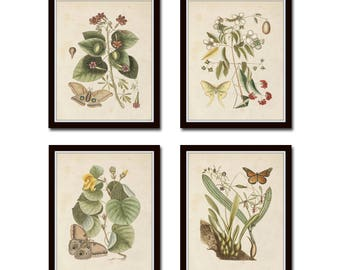 Vintage Butterfly and Botanical Print Set No. 9, Giclee, Prints, Antique Botanical Prints, Wall Art, Vintage Butterfly Prints, Print Set