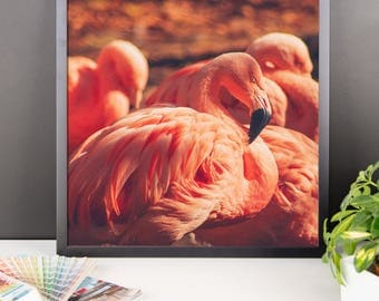 Framed photo paper poster - Red Silo Original Art - Pink Flamingos