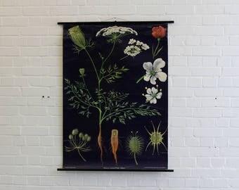Canvas Backed Botanical Chart Circa 1950s