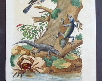 1839: Geckos, Land Crab (Gecarcin). Engraving. Antique Hand-colored Print, Guerin. Original.