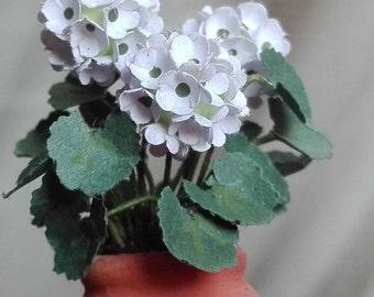 kit geranium white