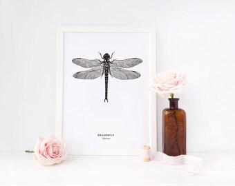 Dragonfly Poster / Botanical Print / Animal Illustration / Scandinavian Art