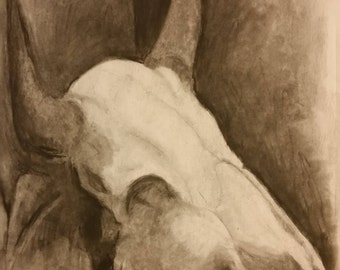 Charcoal Sketch of Animal Skull