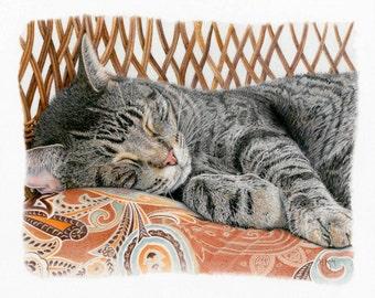 Cat Nap - Fine Art Print of a Colored Pencil Drawing