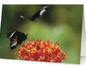 Butterflies Blank Greetin...
