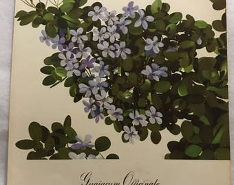Guaiacum Officinale (Lignum Vitae) Bernard & Harriet Pertchik 1951 Print from Flowering Trees of the Caribbean Alcoa Steamship
