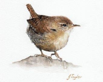Wren: An original watercolour painting by Jan Taylor.