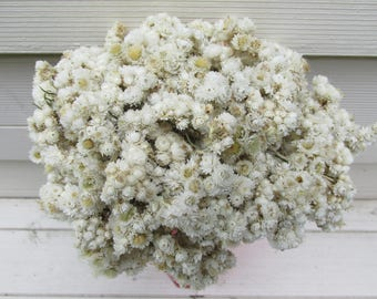 Dried White Pearly Everlasting Flower Mini Strawflowers 60 Small Stems for Weddings, Bouquets, Potpourri, Rustic Decor, Woodland, Wildflower