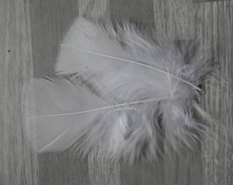 Set of 20 color Turkey feather white