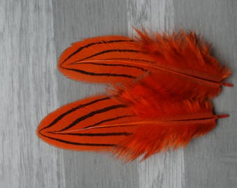 Set of 10 silver pheasant feathers dyed orange