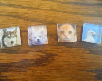 Set of 4 animal fridge magnets