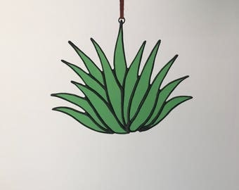 Stained Glass Aloe Plant