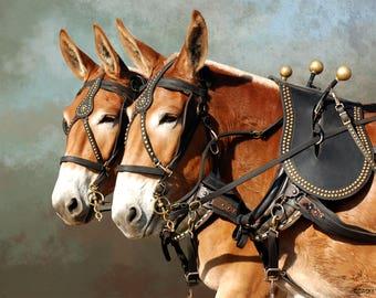 Harmony - Sorrel Draft Mule Team in Harness