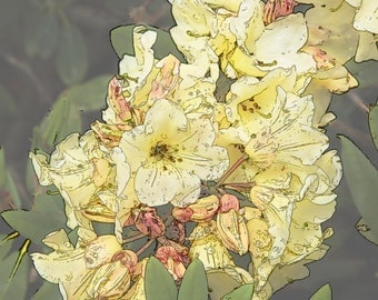 Rhododendron, Yellow