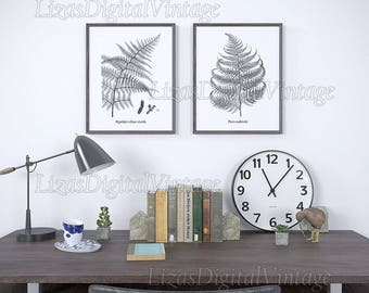 Vintage fern illustration, Set of fern prints, Black and white botanical print, Antique print, Home wall art, Fern decor, Printable fern