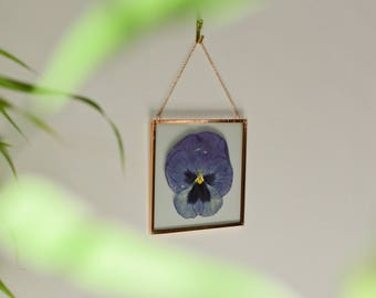 """Real pressed flower wall hanging   pansy   4"""" square glass with copper edging   botanical home decor"""