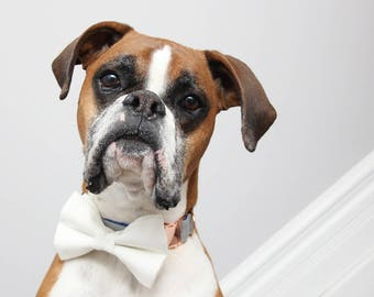 White Wedding Dog Collar, Ivory Cat Bow Collar, Rose Gold Buckle Hardware, Fancy Dog Collar, Fashion Collar, Trendy White Girly Girl Dog Bow