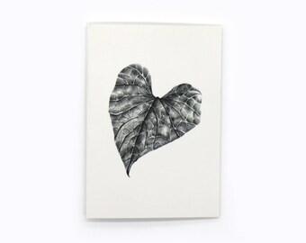 6-pack sweet potato vine leaf gift cards