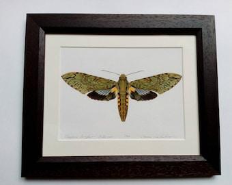 Framed limited edition art print - Cocytius lucifer