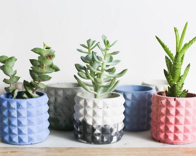 Tri-Planter: Various Selection