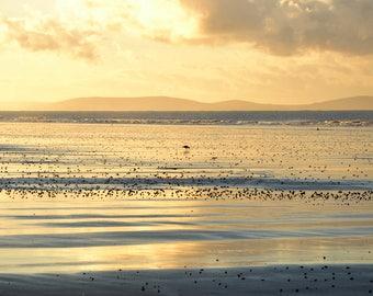 Bird in Sunset, Amroth - Fine Art Photography