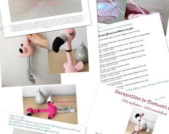 Explanatory - Jacqueline Flamingo