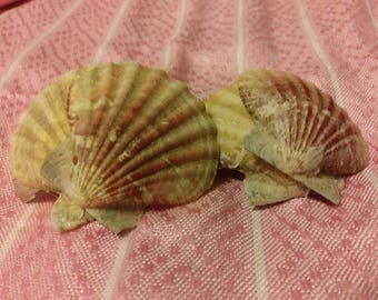 Small double seashell hair clip