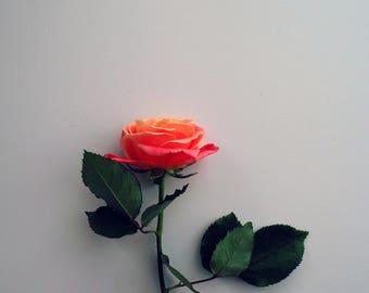 Rose Simplicity - Rose Flower Nature Photography, Fine Art, Wall Art, Home Decor, Digital Instant Download Print