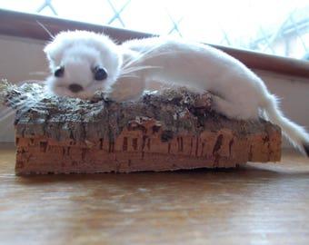 Cute little Taxidermy Ermine