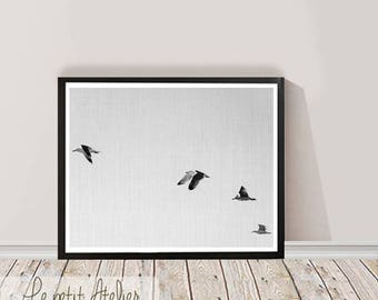 Birds Print, Large Printable Wall Art, Black and White  Photography, Wall Decor, Digital Download, Birds Decor, Large Birds Poster Print