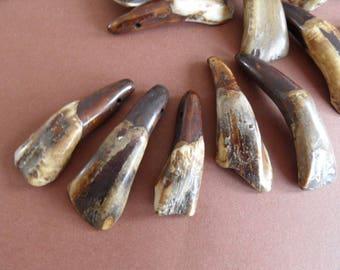 large natural North American buffalo tooth pendant