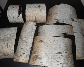 Eight Pieces of Birch Bark