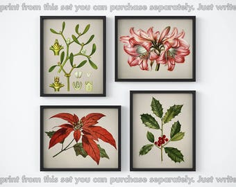 Christmas printable, Holly print, 4 print set, Holiday decor, Mistletoe print, Poinsettia print, 8x10, 11x14, Amaryllis-hippeastrum, Vintage
