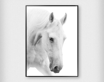 White Horse Print | Nature | Black - White | Stallion - Photography - Poster
