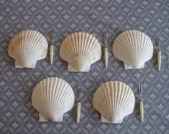 Scallop Shells for Baking, Party Appetizers, Hors d'oeuvres with Forks Set of 5