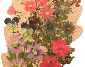 pressed flowers mixed pack in pink, lobelia, verbena, rodanthe, larkspur, baby breath, star flower, pansy, foliage
