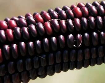 35 BLOODY BUTCHER Red CORN Edible & Ornamental Heirloom Zea Mays Vegetable Seeds