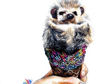 Hedgehog, drawing