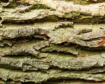 Tree bark photo, trees photography, nature wall art, instant download, wall art printables, nature prints, home decor