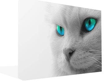 Large Canvas Art White Cat With Blue Eyes Canvas Print Wall Art Ready To Hang Or Poster Print