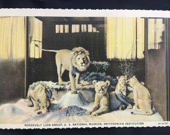 1940s Smithsonian Institution Postcard