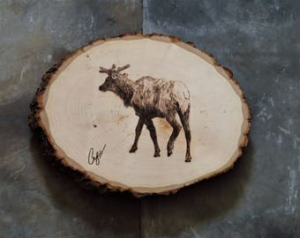 Wood-Burning: Velvet Bull Elk