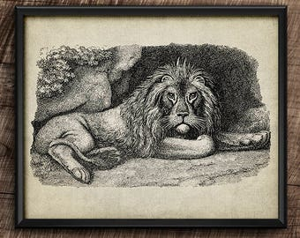 Lion resting · Instant Download · Wall · Printable · Digital File #117