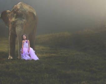Elephant Background | digital download | digital background | composite background | fantasy background | composite | photography | creative