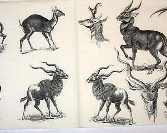Napkin white gazelle horns