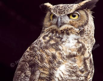 Owl photo great horned owl bird photography animal wall art home decor poster brown black picture
