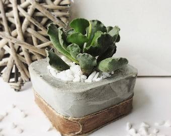 Square concrete planter.